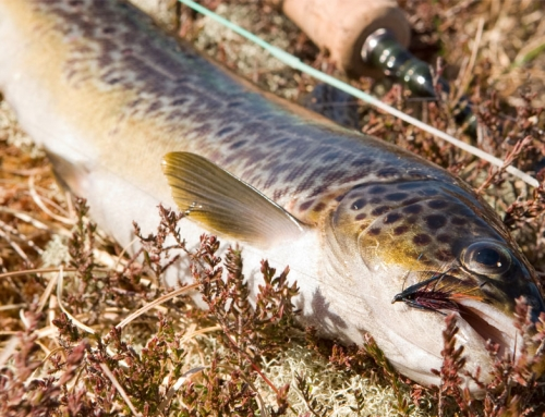 Isle of Lewis – a fly fisher's paradise